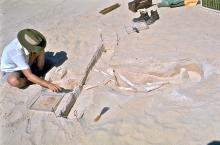 A man sits cross legged in the sand, working to expose more of a partially uncovered skeleton.