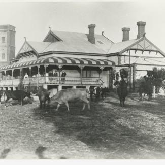 A black and white photograph of the Salvation Army Boys' Home. The building has a large veranda, and there are a group of people standing on it. In front of the building and grazing on the lawn are a group of cattle.